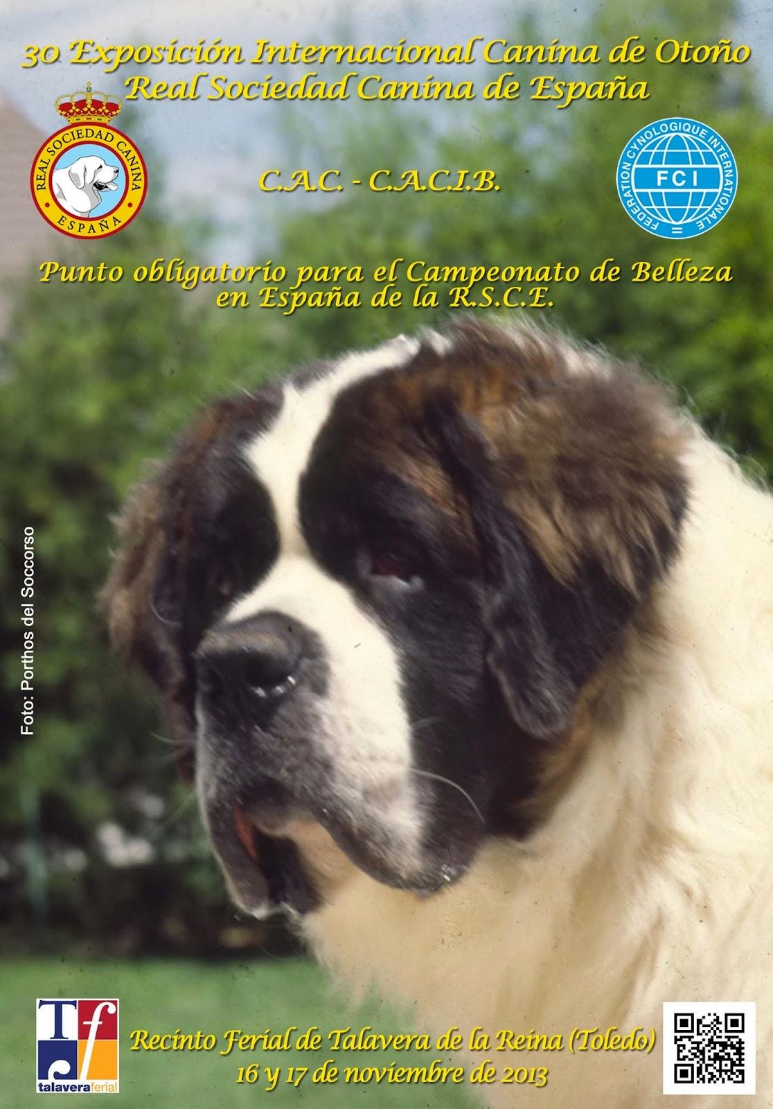 Exposición Canina Internacional Talavera de la Reina 2013