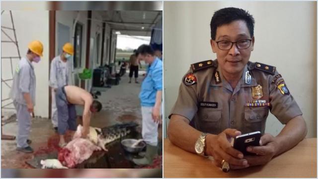 Polisi Serahkan Proses Hukum TKA China yang Kuliti Buaya ke BKSDA Sultra