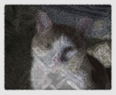 An example image of the cat that manipulate with this code.