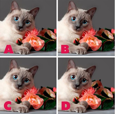 Which image is different? image9