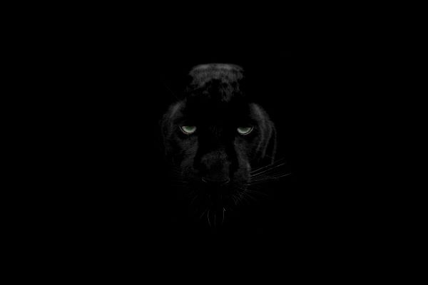 Animal Wallpapers For iPhone