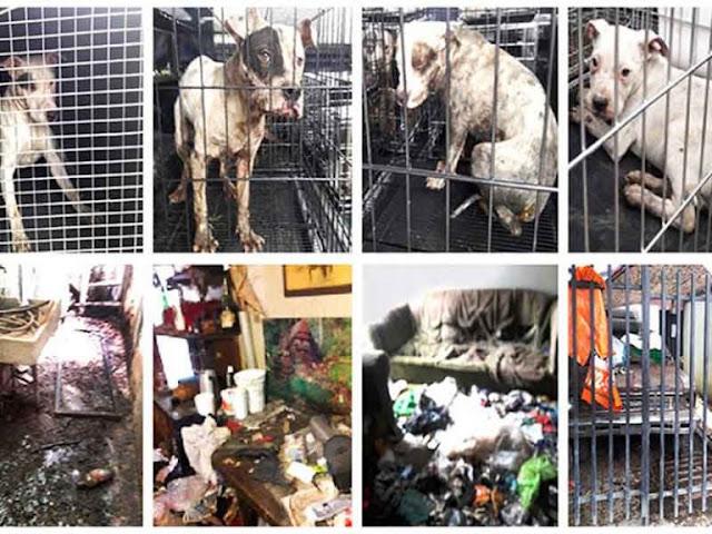 Rescatan a 9 perros que sufrían maltrato y abuso sexua