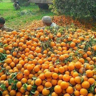 قشر البرتقال في عيادة طب الأسنان