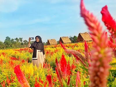 Taman bunga asri tejosari