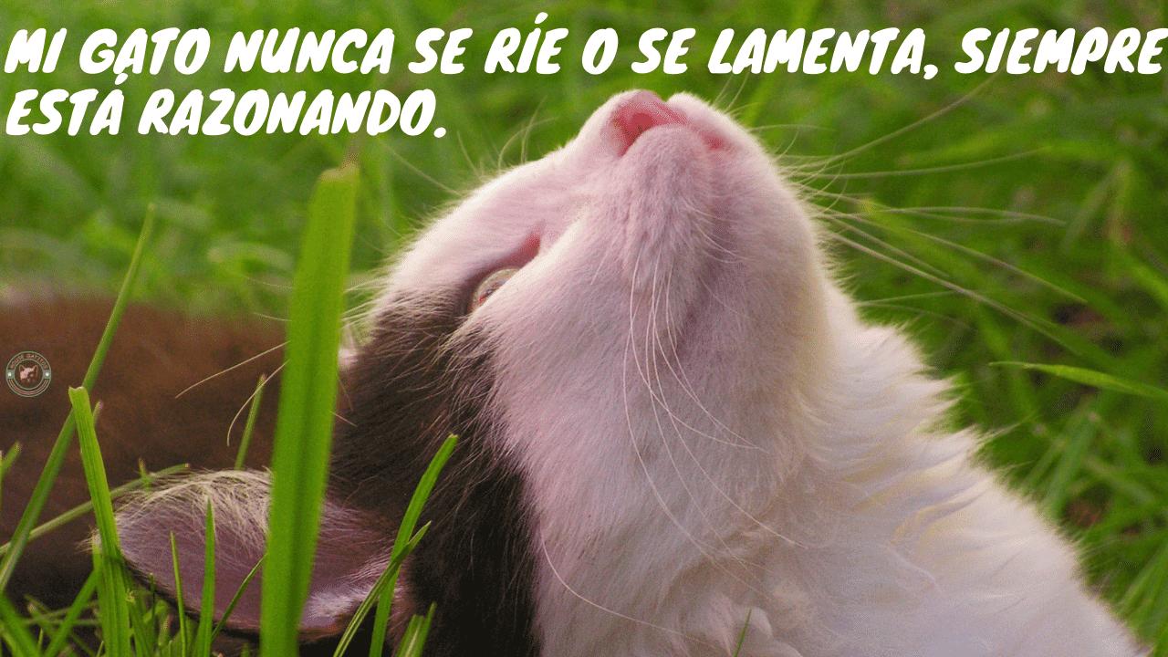 Frases de gatos graciosas
