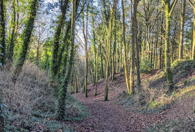 Mullaghreelan Wood near Kilkea Castle in South Kildare Ireland