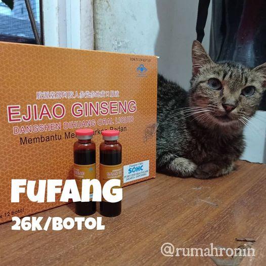 Fufang dan Upaya Menjaga Kesehatan Kucing