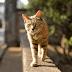 ΤΟ 'ΣΚΑΣΕ από την φυλακή γάτα που μετέφερε ναρκωτικά