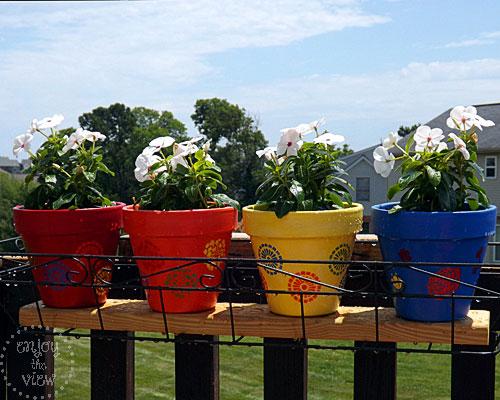 Flowers in the terra cotta pots