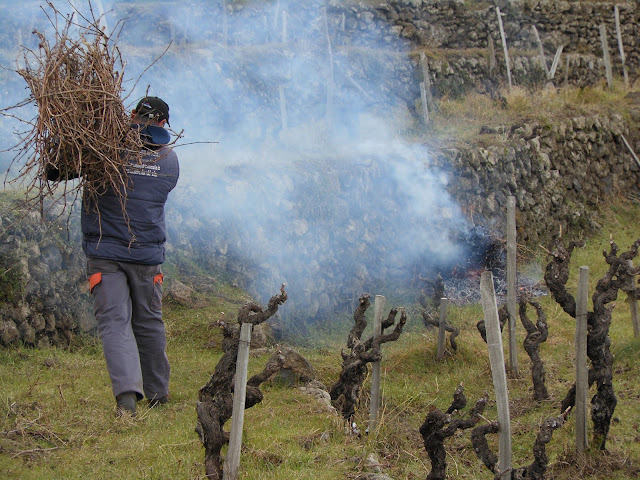 Winter pruning on terraced vineyards of Mt.Etna.