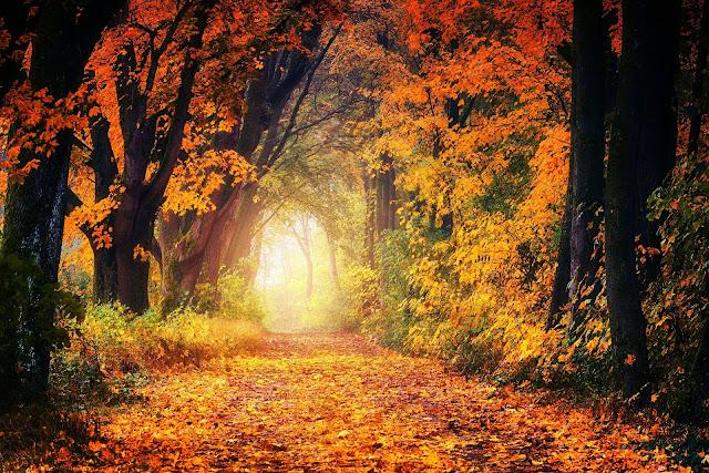 Perfect Autumn days
