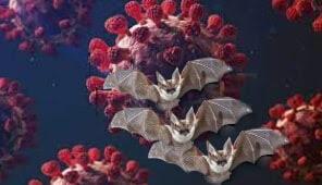 سلالة كورونا جديدة من الخفافيش البريطانية تثير الرعب في بريطانيا
