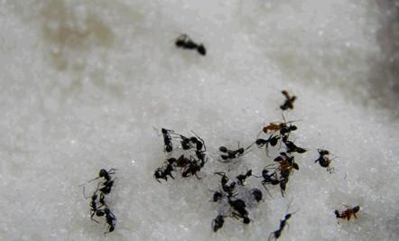 petua elak semut masuk bekas gula