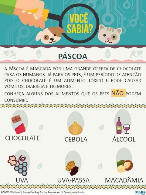 Cuidados na Páscoa: Você sabia que chocolate é tóxico para cães e gatos?