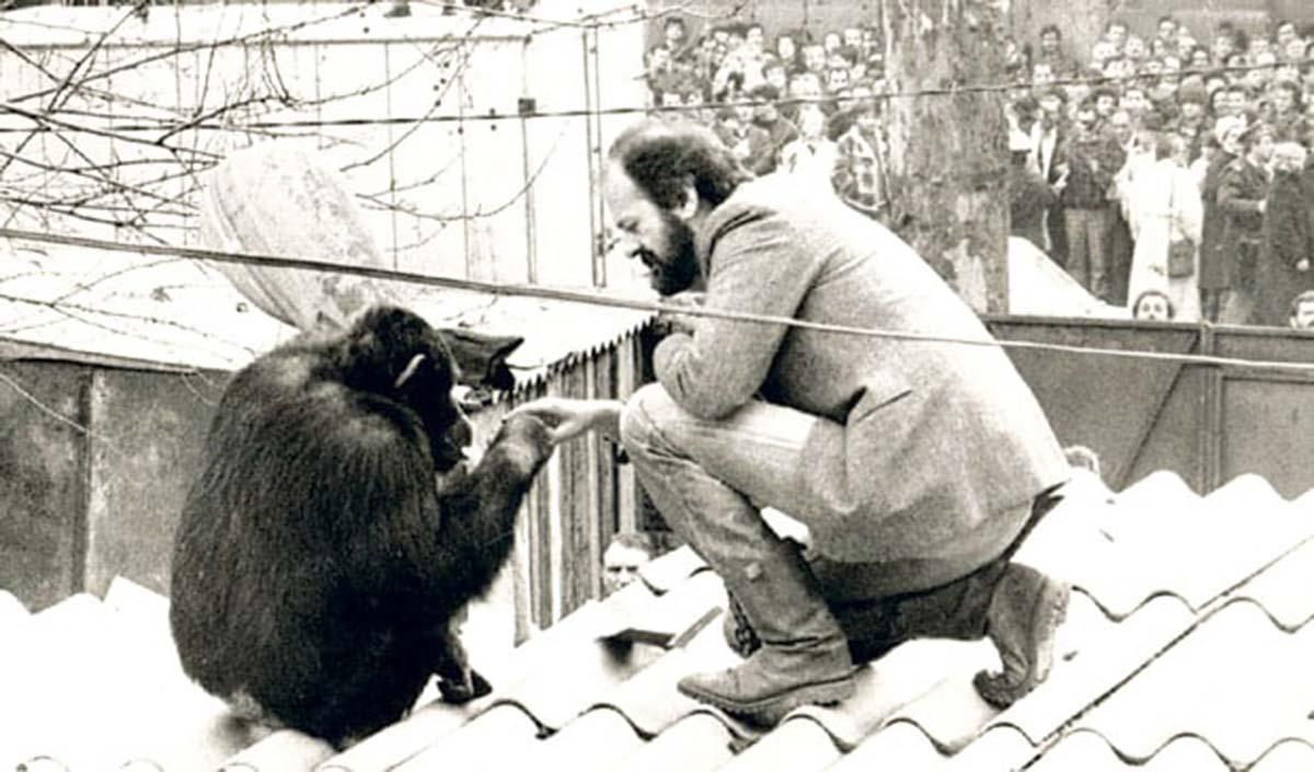 sami chimpanzee vuk bojovic