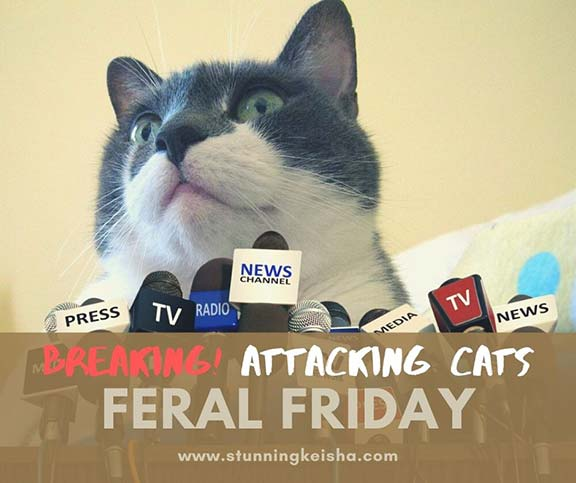 Feral Friday: Street Gangs & Attack Cats
