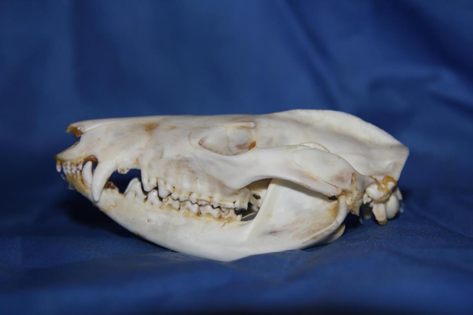 The Animal Bone Yard : December 2012