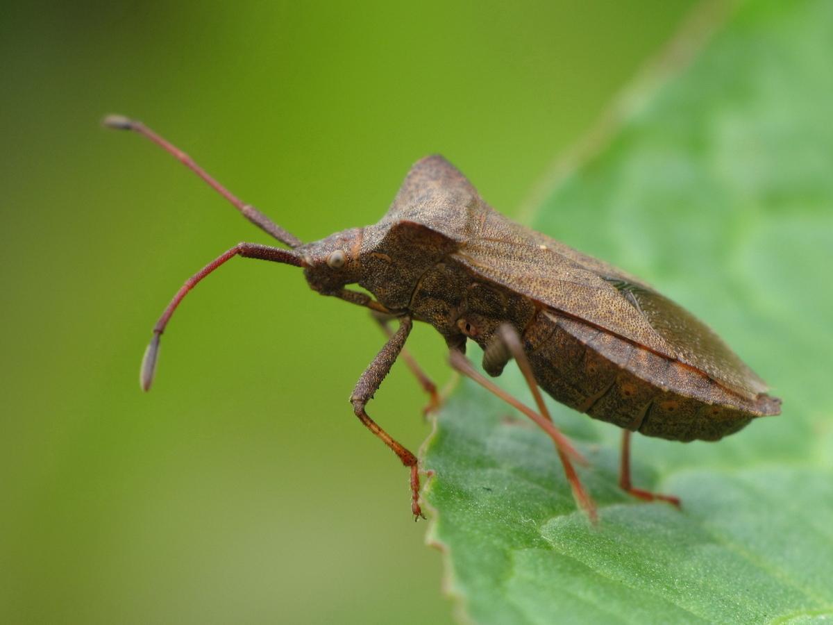 L 39 insecte de notre jardin - Insectes nuisibles du jardin ...