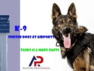 K9,K-9,PLOICE DOG,SNIFFER DOG, K9 TRAINING, K9 BREED