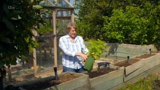 David Domoney planting Raspberries