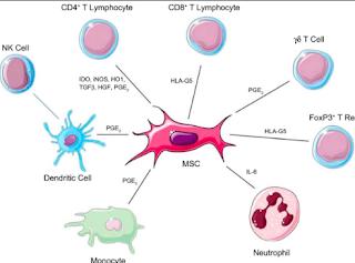 Stem cell and bone marrow transplants