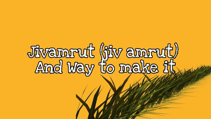 Jeevamrut (jiv amrut) And Way to make it | Jeevamrut kese Bnaye