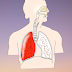 How To Describe The Physiology Of Lungs