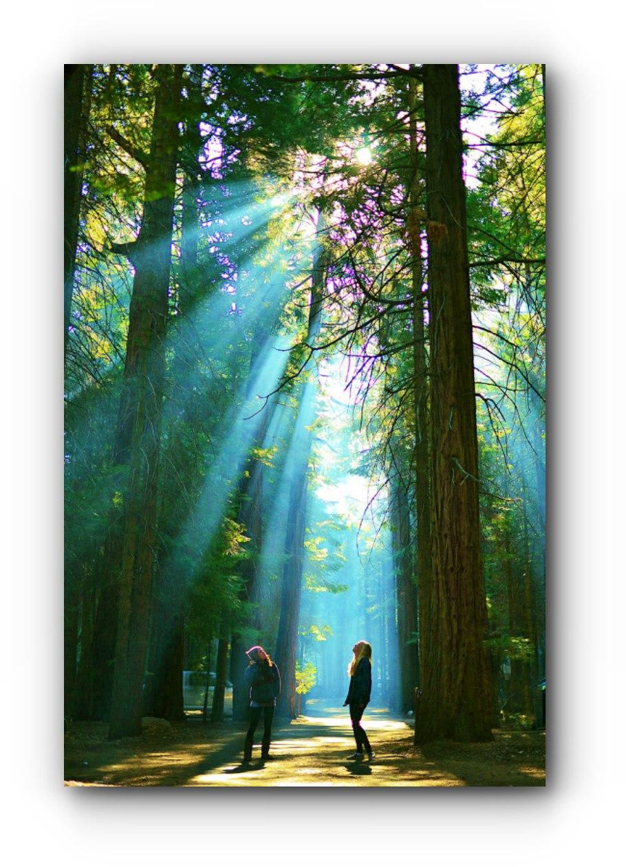 Caminhar na natureza torna o cérebro mais criativo e cura as tristezas!
