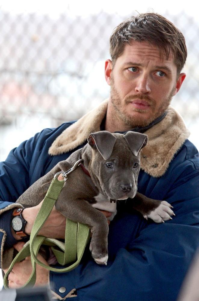hot-hunks-cute-dogs-celeb-actor-dogsitting