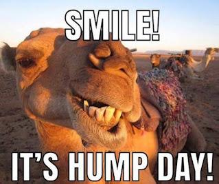 hump day memes camel