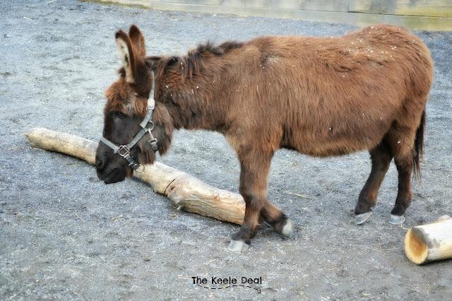 Donkey National Zoo Washington DC
