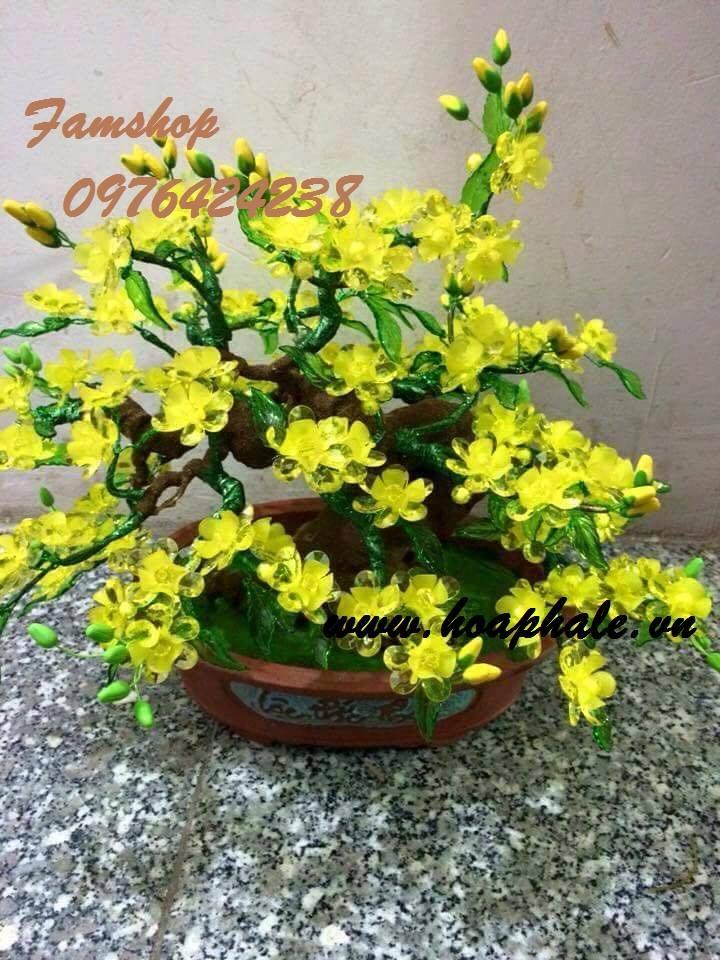 Goc bonsai mai dao tai Hoang Cau