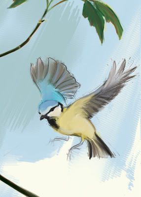 The Blue Tit - Cyanistes caeruleus