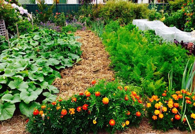 Vegetable%2BgardenLynn%2BWood%2BTasmania