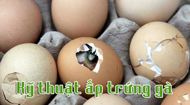 Kỹ thuật ấp trứng gà