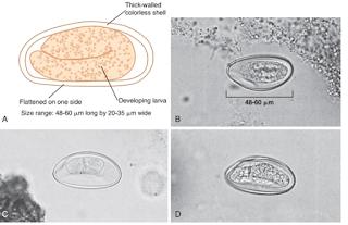 Praktikum Parasitologi Ciri-Ciri Nematoda