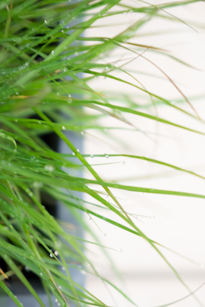 www.fim.works | Lifestyle-Blog | Gras als Topfpflanze, Pflanze