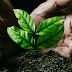 Ações de gestão ambiental serão implantadas em Ponto Novo, Campo Formoso, Pindobaçu, Filadélfia, Senhor do Bonfim e cidades da região