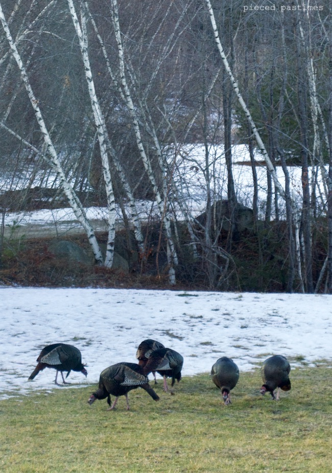 Wild Turkeys at Pieced Pastimes