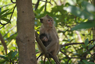 Wild monkeys in Eco tour to Can Gio