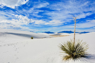 A solitary Yucca plant with a tall stalk in lots of white sand under a blue and white sky. Photo by Josh Rangel on Unsplash
