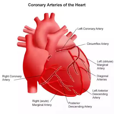 Heart-Attack-Care-and-Various-Treatment