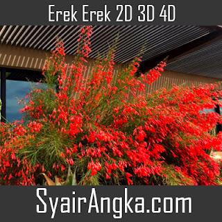 Erek Erek Bunga Air Mancur 2D 3D 4D