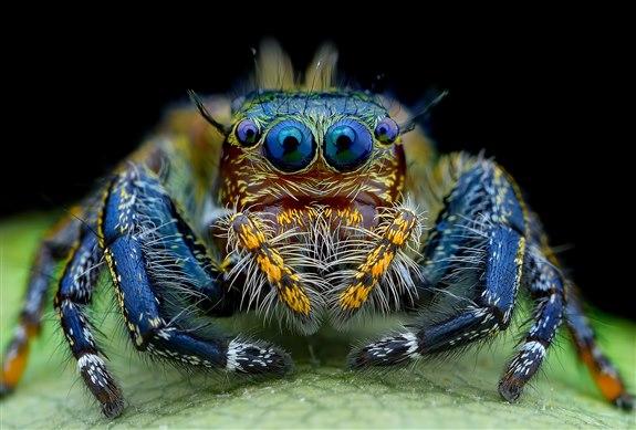 Örümcek - Ö Harfi ile Hayvan İsimleri