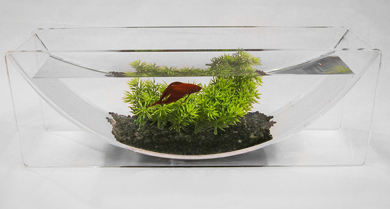 If it 39 s hip it 39 s here archives the betta bowl and aqua for Fish tank planter
