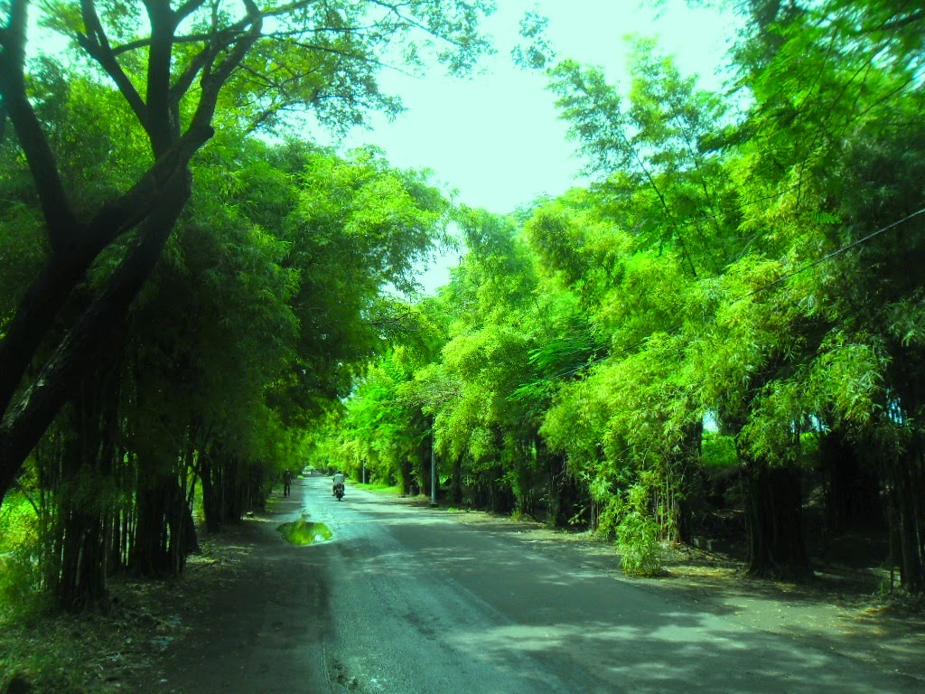 surabaya bagus hutan bambu taman harmoni