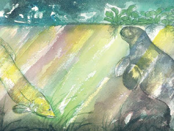 Semana do Meio Ambiente: conheça Ecossistemas Brasileiros 🌿 (Editora Biruta)