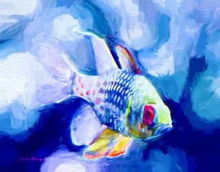 Pajama Cardinalfish Impasto