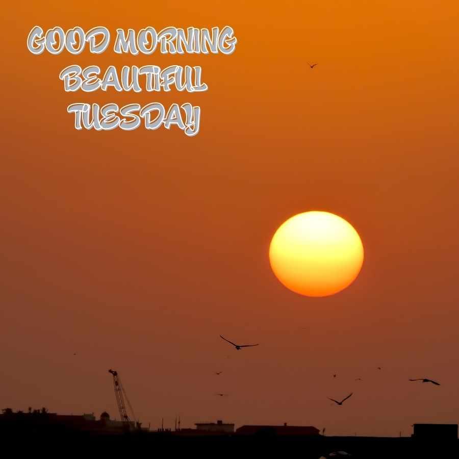 happy good morning tuesday