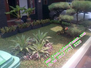 Tukang Taman Cipayung | Pondok Ranggon - Jakarta Timur